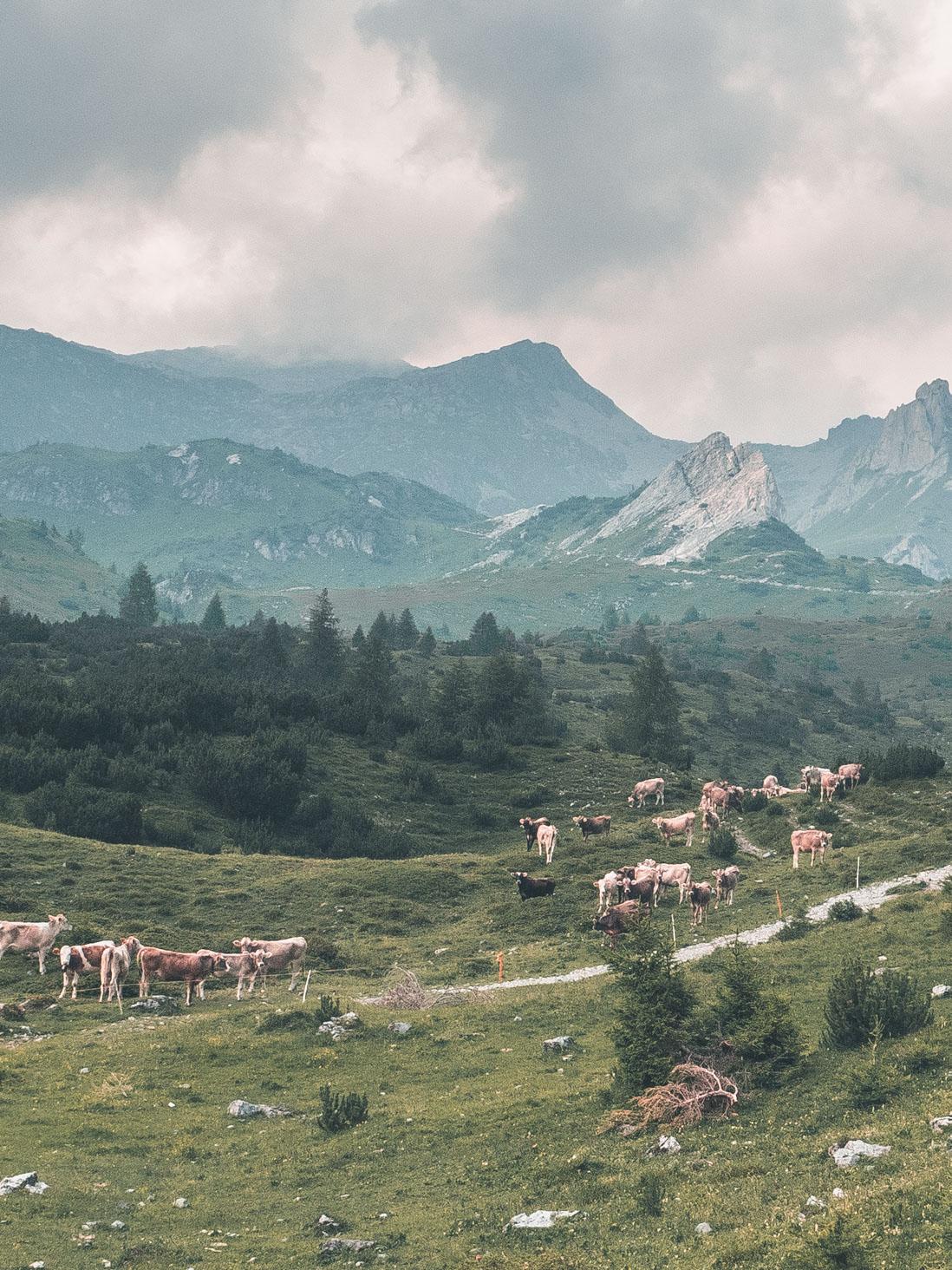GLR 37 Region Image 3